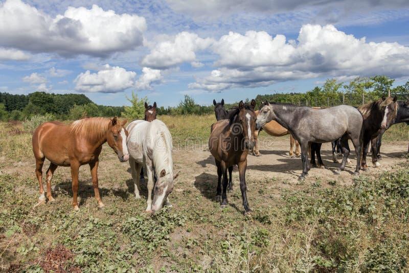 Chevaux sur la terre de pâturage photo libre de droits