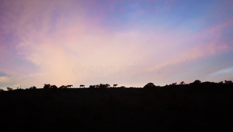 Chevaux sur Ridge photographie stock