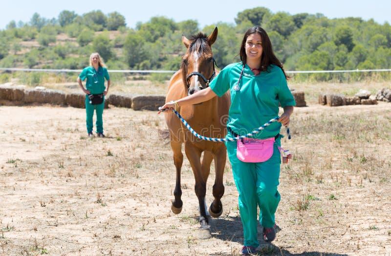 Chevaux vétérinaires à la ferme photo libre de droits
