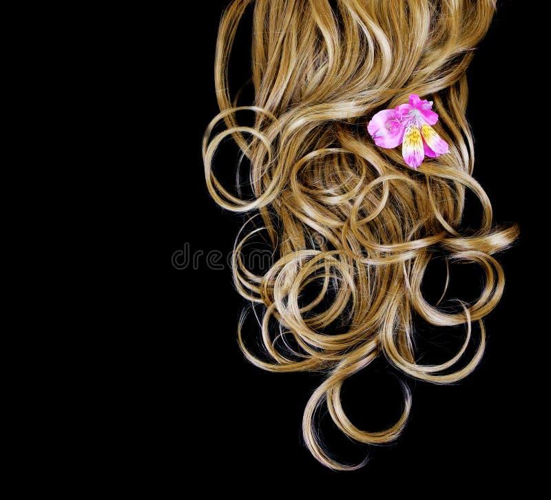 Cheveu brun bouclé au-dessus de noir avec la fleur rose d'iris photo stock