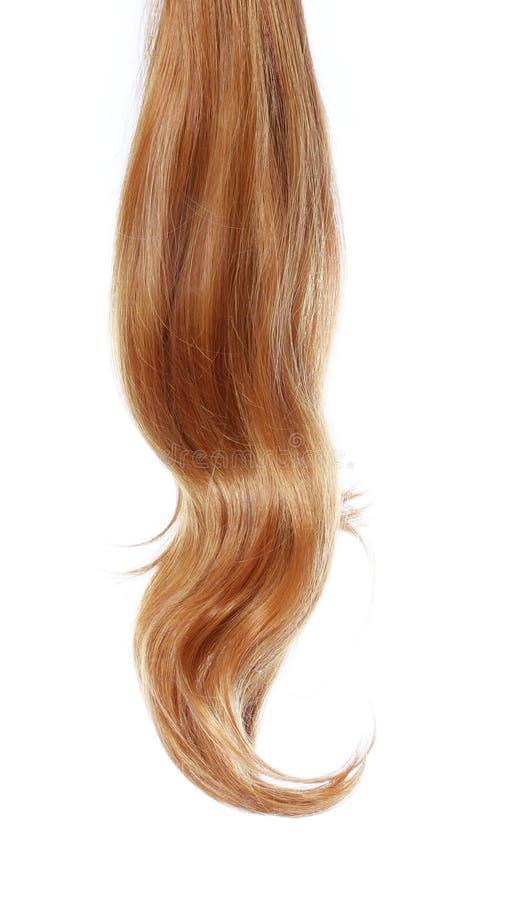 Cheveux bruns onduleux au-dessus de blanc image libre de droits