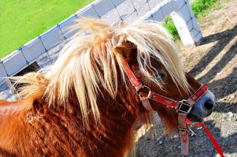 Cheveux de mule de plan rapproché longs photographie stock libre de droits