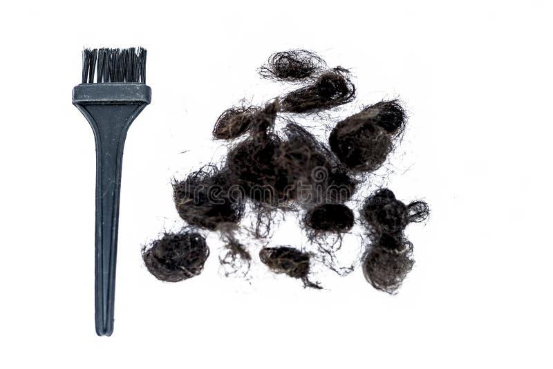 Cheveux endommagés d'isolement sur le blanc avec un concept de brosse de cheveux des poils de mort image libre de droits