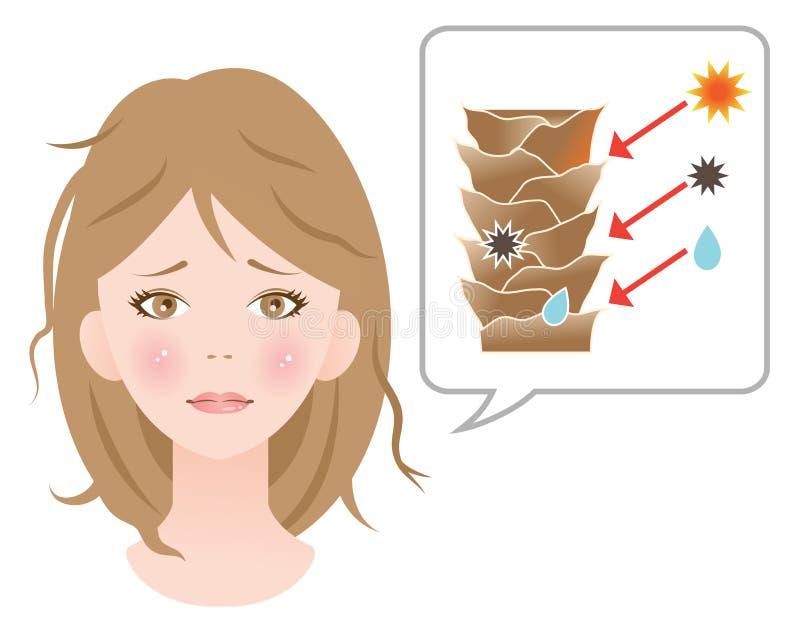 Cheveux endommagés par cause endommagés de couche de cuticle illustration libre de droits