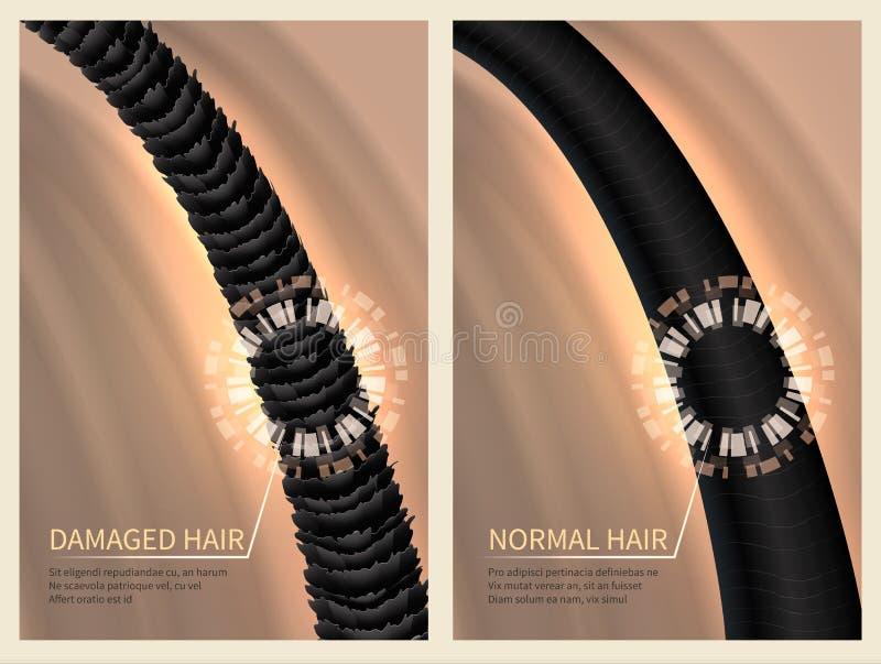 Cheveux sains durs et normaux endommagés par plan rapproché Illustration de vecteur pour le concept de haircare illustration libre de droits