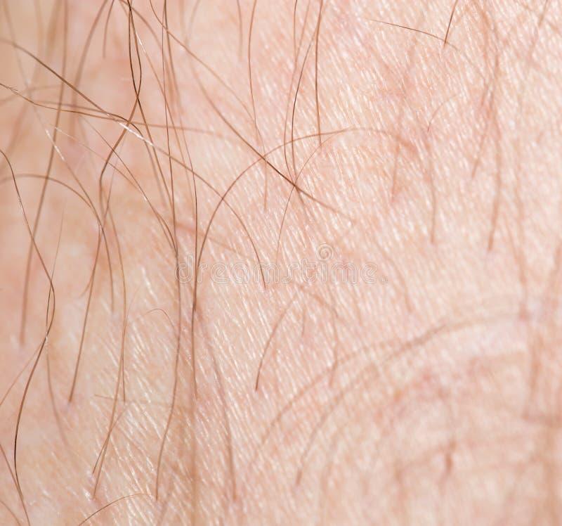 Cheveux sur la peau Macro photographie stock libre de droits