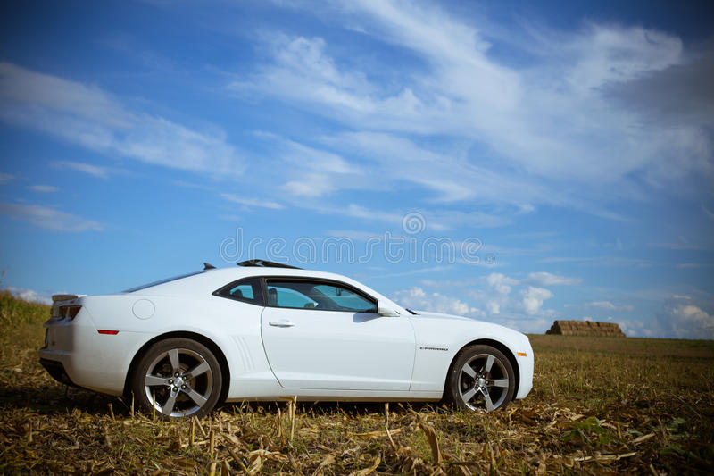Chevrolet Camaro in a corn field stock photography