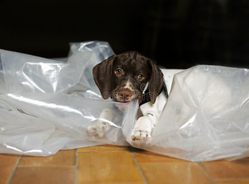 Chew del perrito foto de archivo libre de regalías