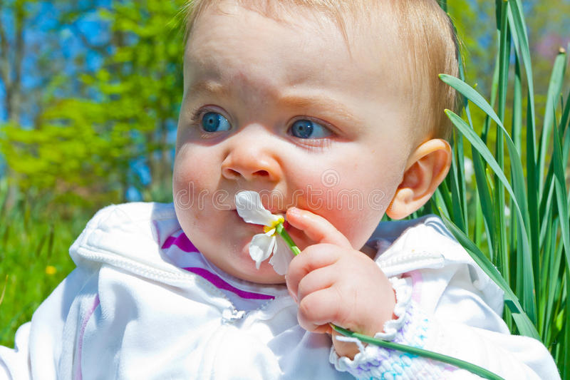 Chewing on Flower. Close-up for an infant girl less than one year old. She is sitting in a field with flowers, grass, and trees and grabbing a flower to chew on royalty free stock photography
