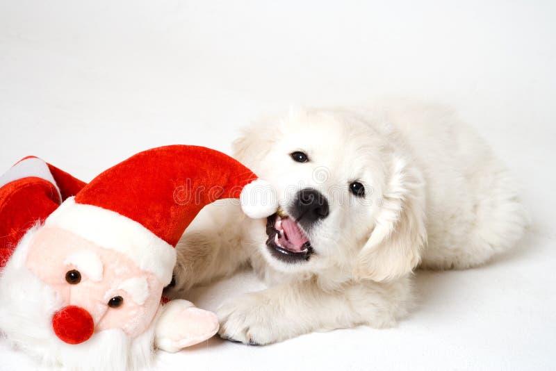 Chewing on santa royalty free stock photos