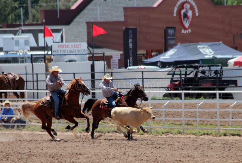 Cheyenne dni Nadgraniczny rodeo 2013 zdjęcie royalty free