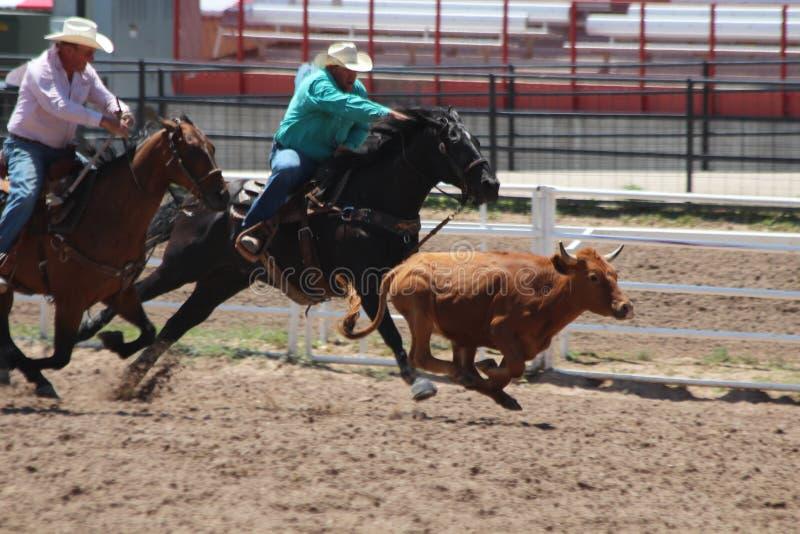 Cheyenne dni Nadgraniczny rodeo 2013 fotografia royalty free