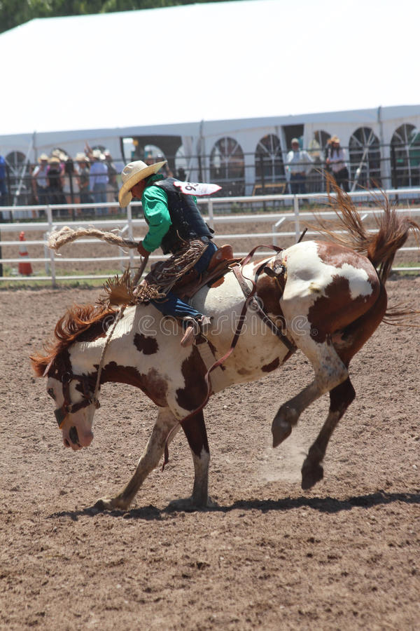 Cheyenne dni Nadgraniczny rodeo 2013 obrazy stock