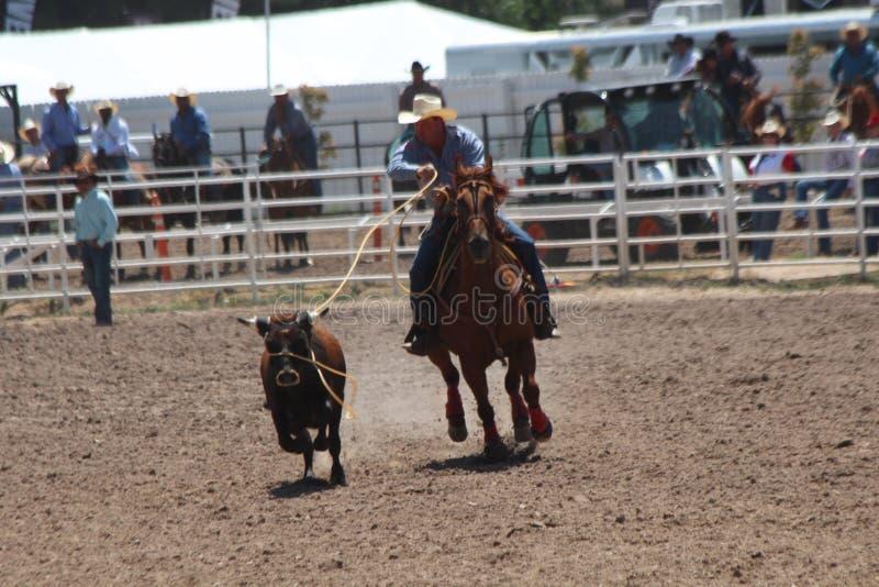Cheyenne dni Nadgraniczny rodeo 2013 zdjęcie stock