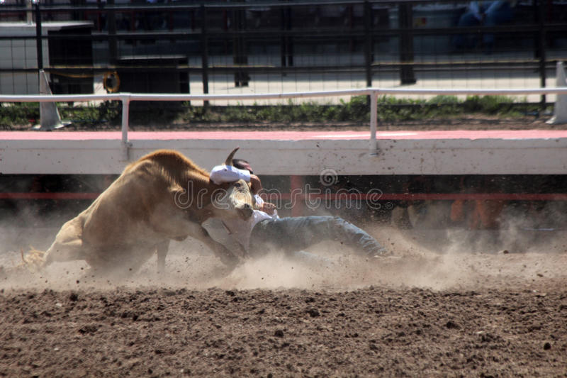 Cheyenne dni Nadgraniczny rodeo 2013 obrazy royalty free