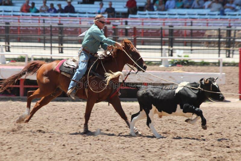 Cheyenne Frontier Days Rodeo 2013 stock afbeelding