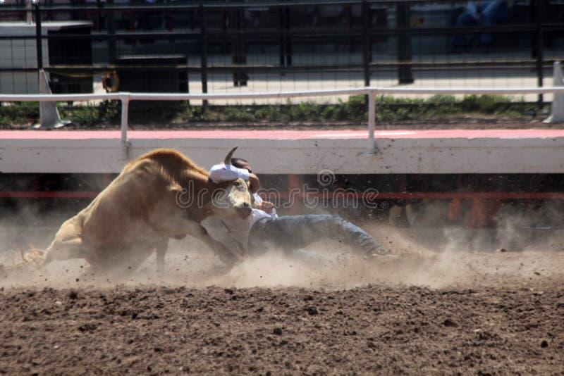 Cheyenne Frontier Days Rodeo 2013 royalty-vrije stock afbeeldingen