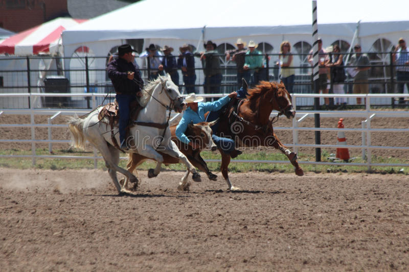 Cheyenne Frontier Days Rodeo 2013 royalty free stock photos