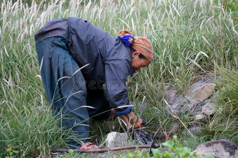 Nepalese woman works in a vegetable garden in the village of Chusang. Nepal. CHHUSANG, UPPER MUSTANG / NEPAL - August 21:Nepalese woman works in a vegetable stock images