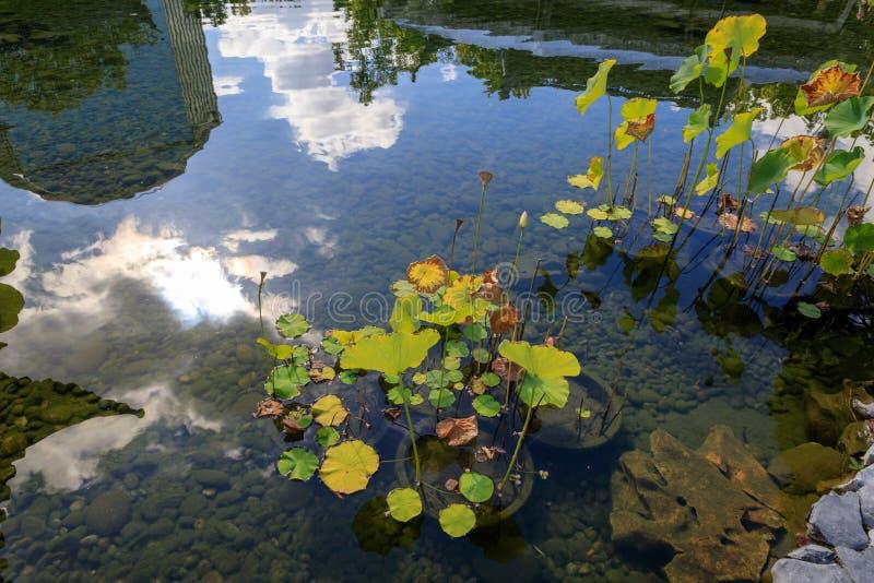 chińczyk ogrodowy Oregon Portland fotografia stock
