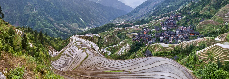 Chińscy wioska ryż zieleni pola zdjęcie royalty free