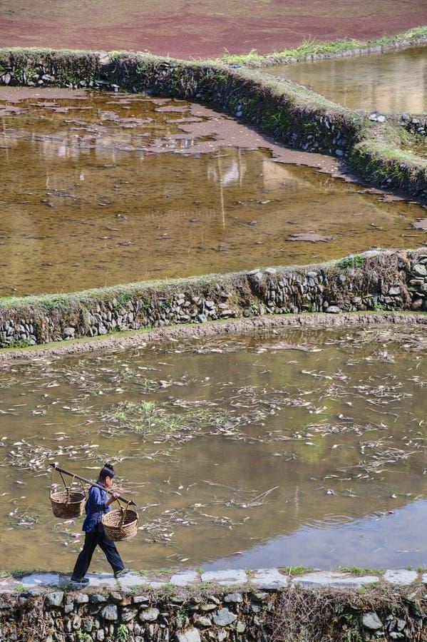 Chińska chłopska kobieta jest na ścieżce wzdłuż zalewających ryżowych poly fotografia stock