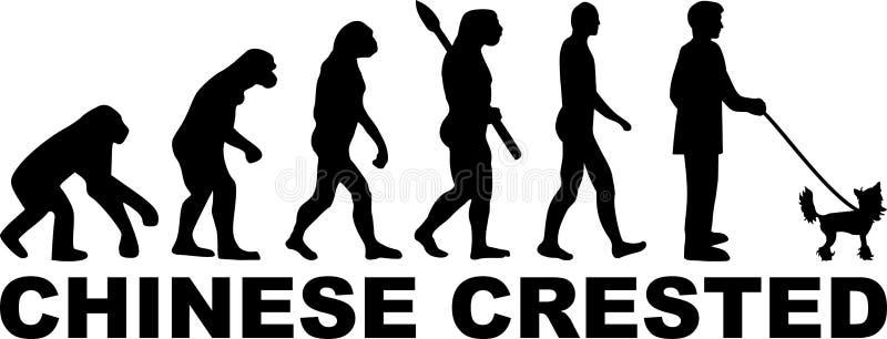 Chińska Czubata ewolucja z imieniem ilustracji