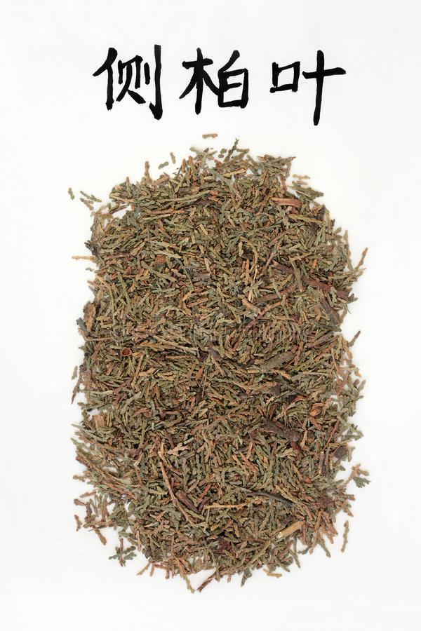 Chiński Arborvitae ziele obraz stock