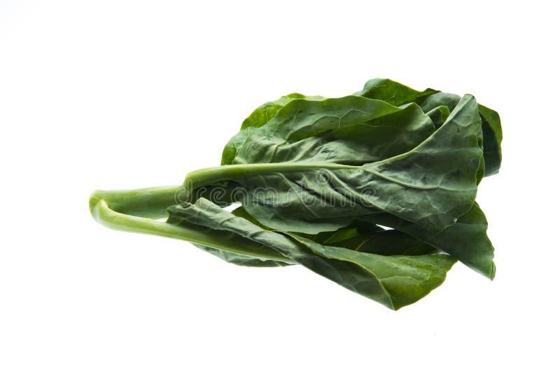Chiński kale warzywo: świeży chiński kale warzywo na białym b zdjęcie royalty free