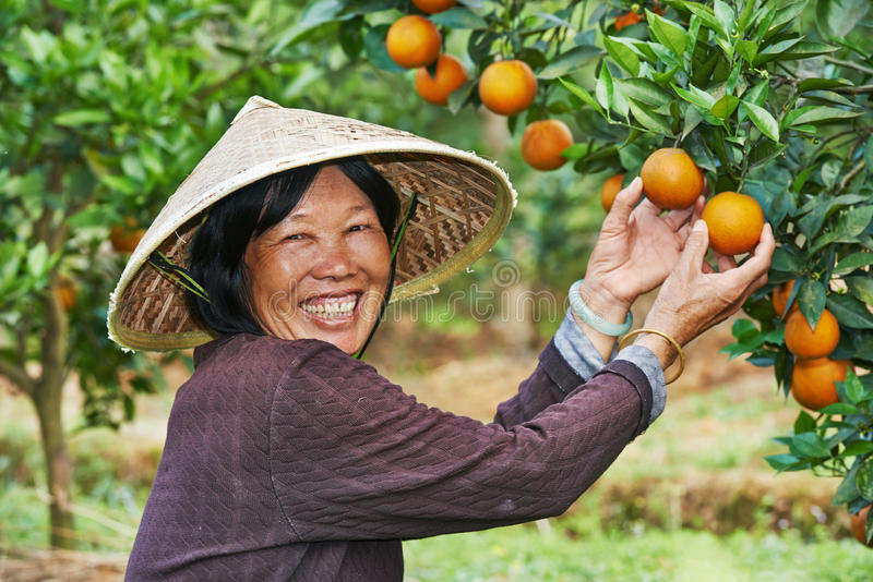 Chiński rolniczy robotnik rolny fotografia royalty free