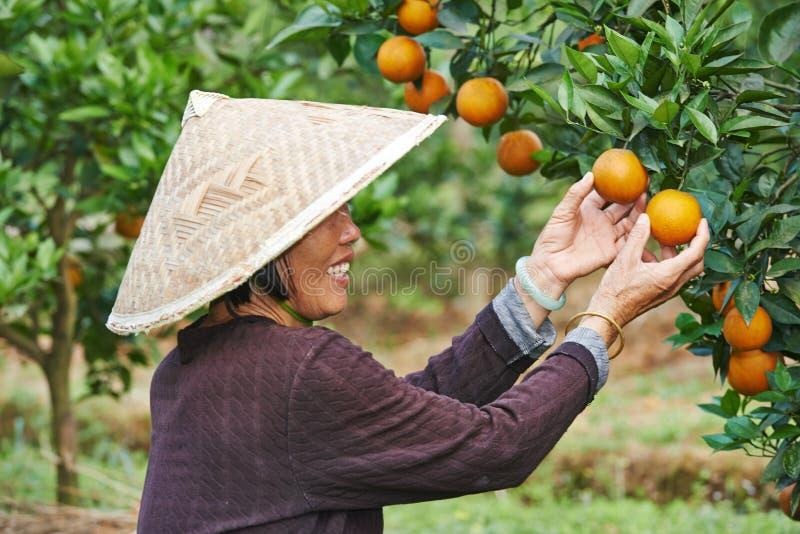 Chiński rolniczy robotnik rolny zdjęcia royalty free