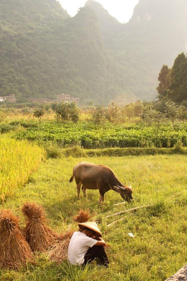 chińskiej scenerii typowy yangshuo fotografia stock