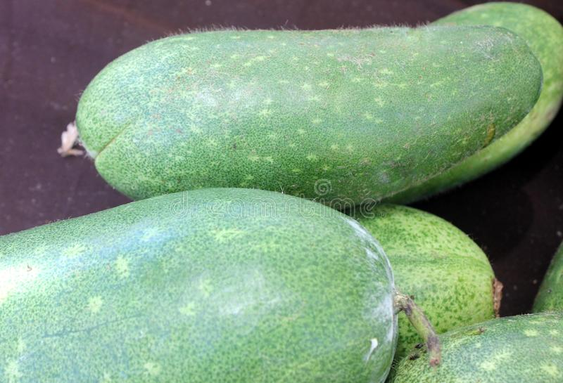 Chi qua, Fuzzy gourd, Mokwa, Benincasa hispida var. chieh-gua. A type of wax gourd with light green skin covered with fine soft hairs, popular in Chinese stock images