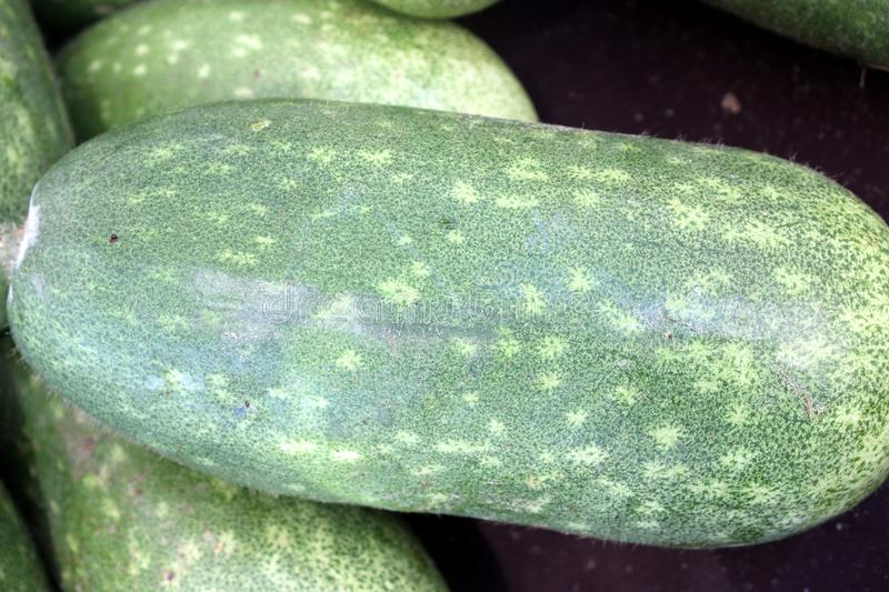 Chi qua, Fuzzy gourd, Mokwa, Benincasa hispida var. chieh-gua. A type of wax gourd with light green skin covered with fine soft hairs, popular in Chinese royalty free stock photos