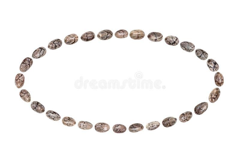Chia frö i ellipsform royaltyfri fotografi