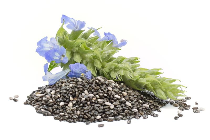 Chia Salvia hispanica Pile of seeds with flowers on white back royalty free stock image