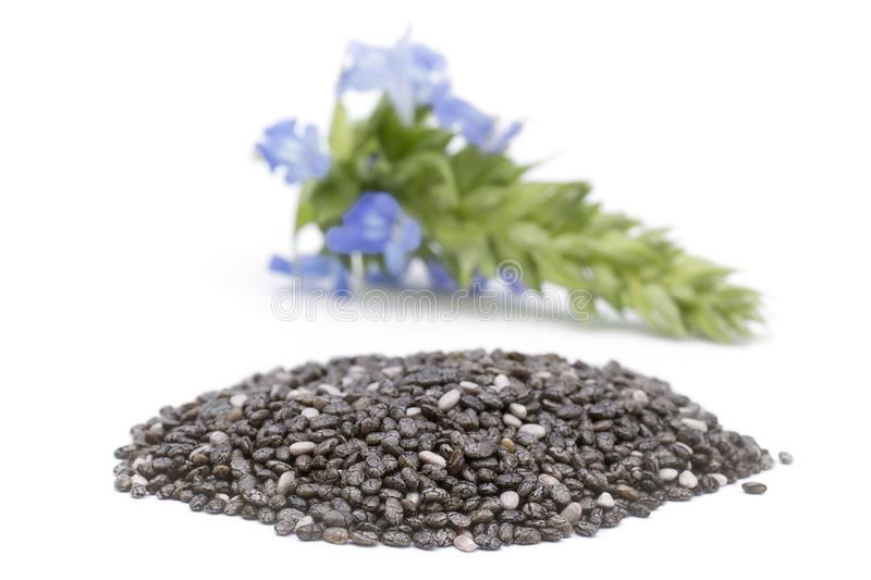 Chia Salvia hispanica Pile of seeds with flowers on white back royalty free stock photography