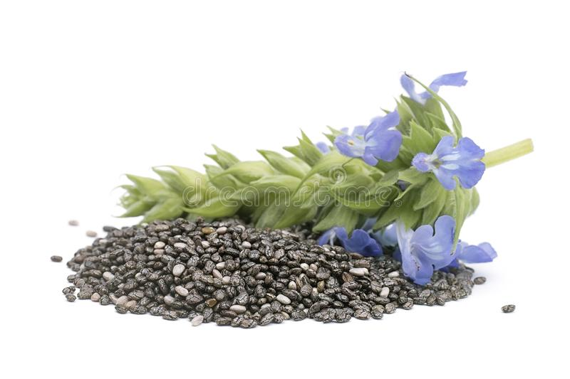 Chia Salvia hispanica Pile of seeds with flowers on white back stock image