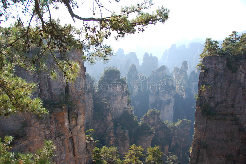Chian forest reserve3 royalty free stock images