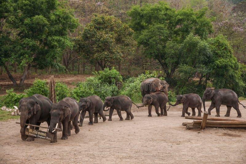 Chiang Mai, exposition d'éléphant de camp d'entraînement d'éléphant de la Thaïlande photos stock
