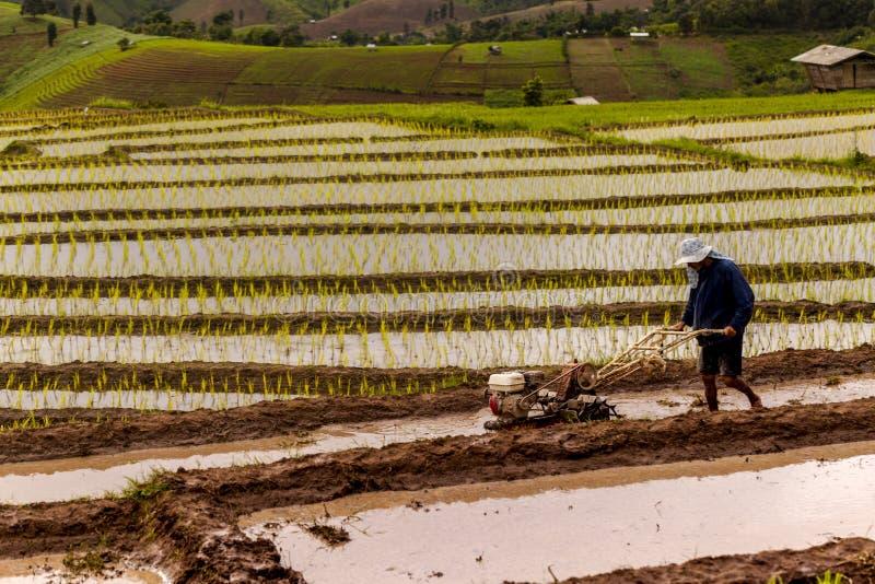 Chiang Mai, Tailândia: Fazendeiros do arroz do 8 de outubro de 2016 no campo do arroz sobre fotografia de stock