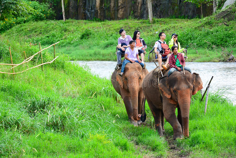 CHIANG MAI TAJLANDIA, Listopad, - 13, 2015: Słonie i mahouts, podczas gdy eskortujący turysty jechać słonie wzdłuż rzeki zdjęcia stock