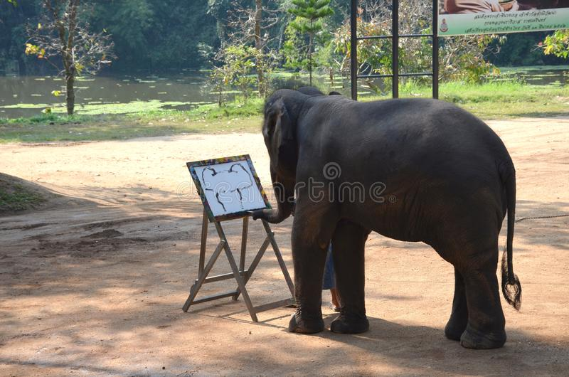 Chiang Mai, Thailand - December 16, 2015: Daily show at the Thai Elephant Conservation Center in Lampang. The elephant draws stock photo