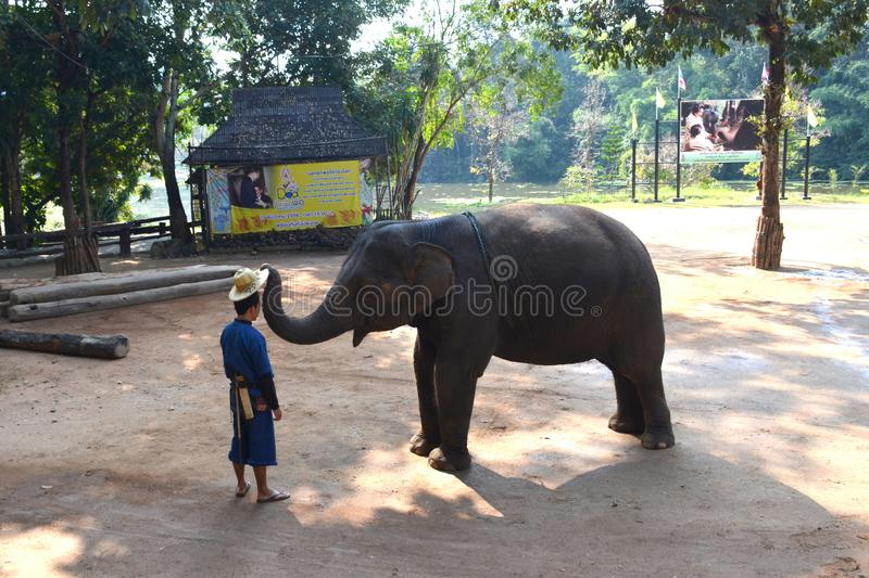 Chiang Mai, Thailand - December 16, 2015: Daily show at the Thai Elephant Conservation Center in Lampang. Elephant and a mahout royalty free stock photo