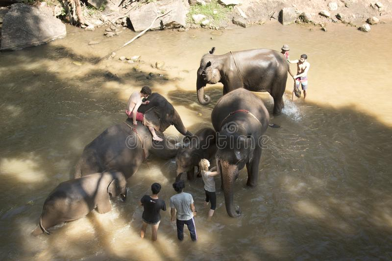 CHIANG MAI, THAILAND - Jan. 9: The Elephants and traveler bathing show at The Samueng Elephant Camp in the Kaew Ta Chang waterfal. L , January 9, 2018 in stock photos
