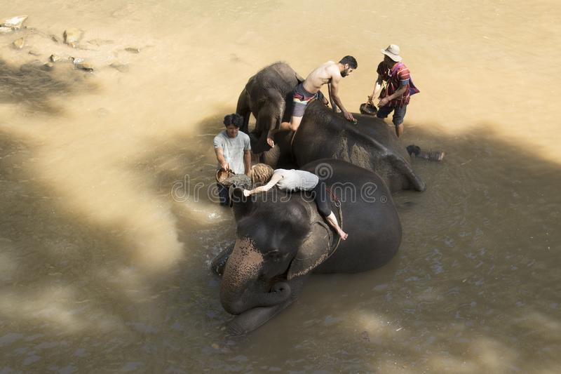 CHIANG MAI, THAILAND - Jan. 9: The Elephants and traveler bathing show at The Samueng Elephant Camp in the Kaew Ta Chang waterfal. L , January 9, 2018 in stock image