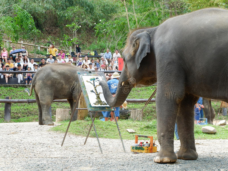 CHIANG MAI, THAILAND  MAY 6, 2017: The elephant painting show at Maesa elephant camp, Chiang mai, Thailand. CHIANG MAI, THAILAND – MAY 6, 2017: The elephant royalty free stock image