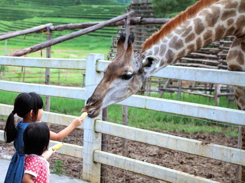 Chiang Rai, Thailand, Aug28, 2016: Twee meisjes die en op giraf letten voeden tijdens een reis aan een stadsdierentuin bij het Pa stock foto's