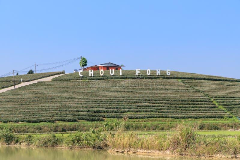 Chiang Rai Thailand - Februari 19, 2018: Choui Fong Tea koloni, berömd turist- destination arkivbild