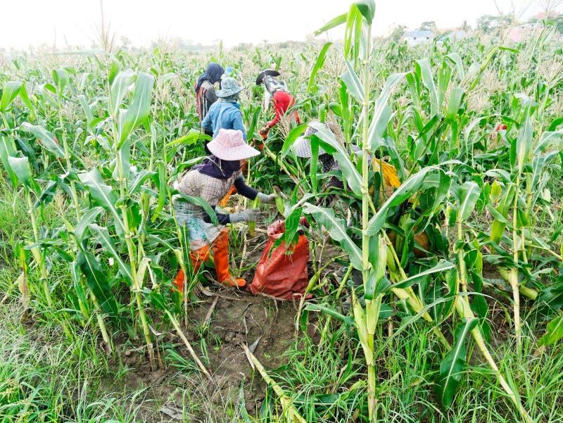 CHIANG RAI, THAILAND - 7. JUNI: Ausländische Arbeiter birmanisches Myanmar oder Birma stellen an, um Zuckermais im Bereichsnorden stockbilder
